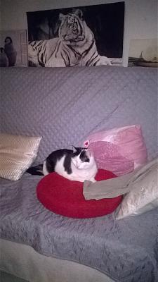 Edgi, adore les autres chats ! Aidofélins Maisons-Laffitte (78) - Page 2 Wp_20112