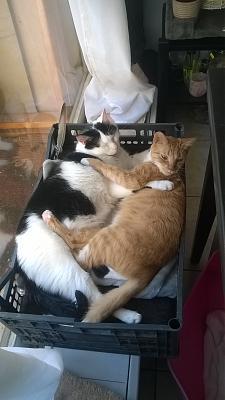 Edgi, adore les autres chats ! Aidofélins Maisons-Laffitte (78) - Page 2 Wp_20113