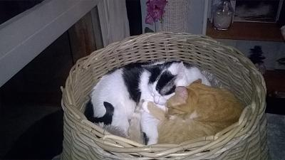 Edgi, adore les autres chats ! Aidofélins Maisons-Laffitte (78) - Page 2 Wp_20114