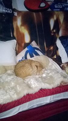Edgi, adore les autres chats ! Aidofélins Maisons-Laffitte (78) - Page 2 Wp_20115
