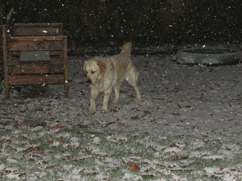 neige en Limousin Img_8610