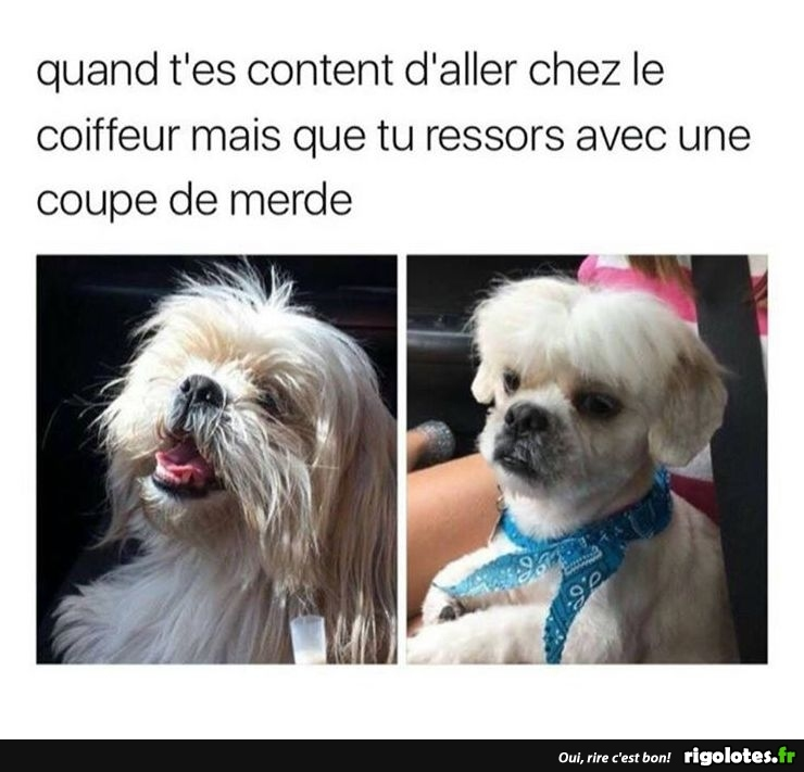HUMOUR - Page 37 20180320