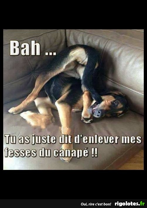 HUMOUR - Page 6 20180336