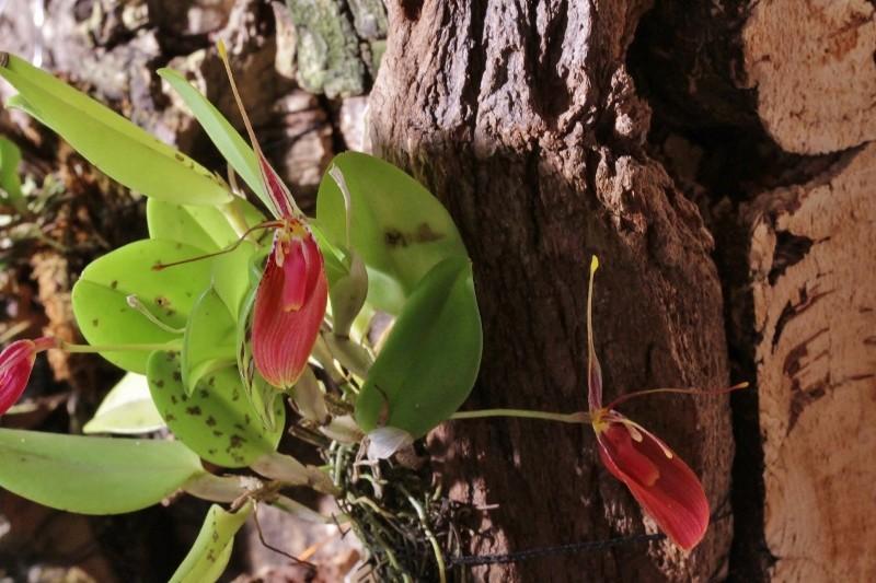 Miniatur-Orchideen Teil 4 - Seite 3 Img_1825