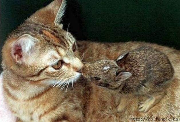 Les chats - nos petits compagnons - Page 2 X2210