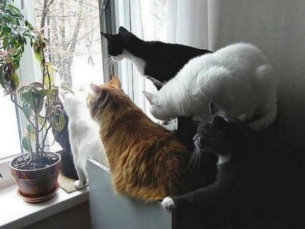 Les chats - nos petits compagnons X_0510