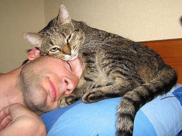Les chats - nos petits compagnons X_0610