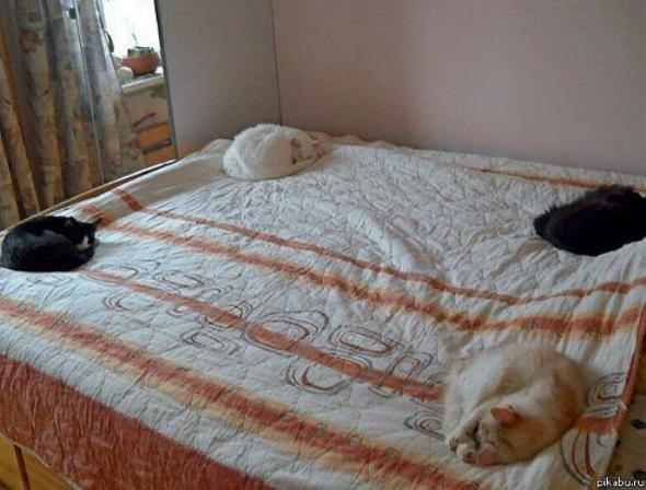 Les chats - nos petits compagnons X_0711