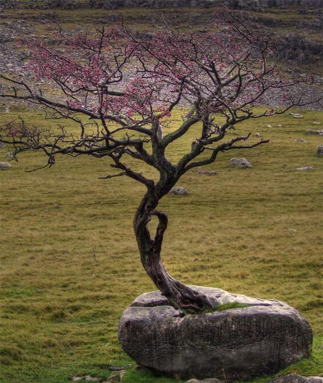 les arbres qui ne voulaient pas mourir X_07_n10