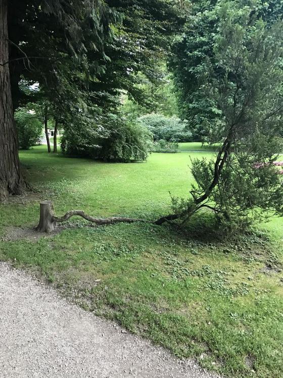 les arbres qui ne voulaient pas mourir X_09_t10