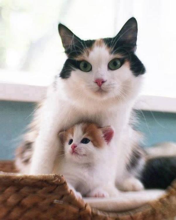 Les chats - nos petits compagnons X_1015