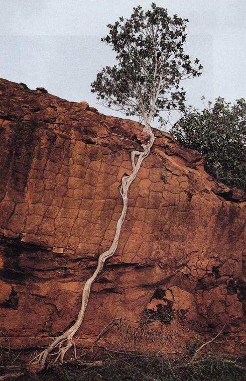 les arbres qui ne voulaient pas mourir X_11_l10