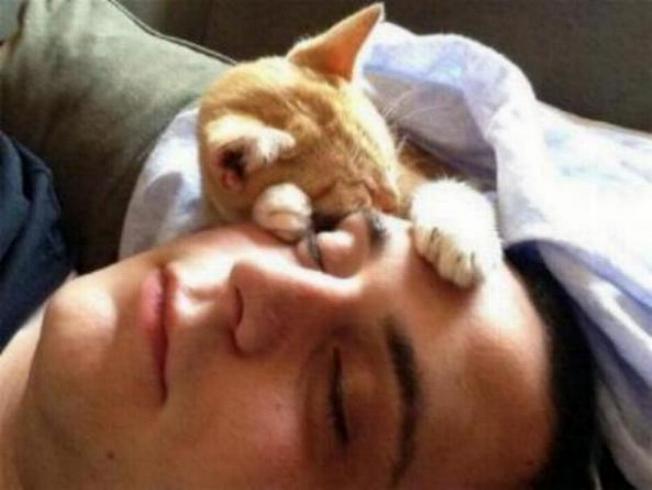 Les chats - nos petits compagnons X_1416