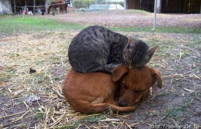 Les chats - nos petits compagnons - Page 2 X_1516