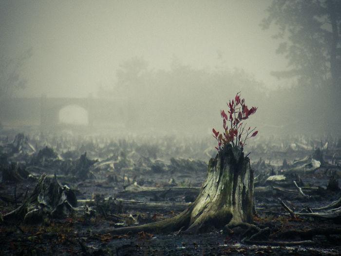 les arbres qui ne voulaient pas mourir X_15_s10