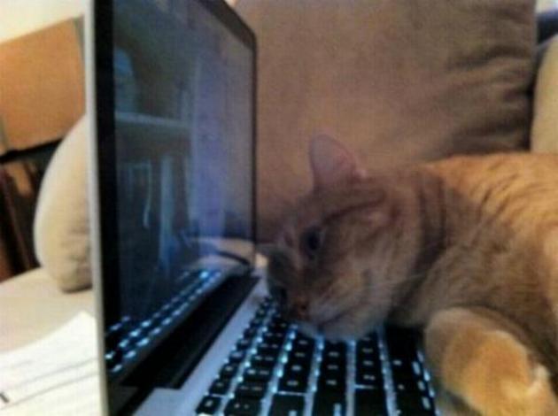 Les chats - nos petits compagnons - Page 2 X_1615