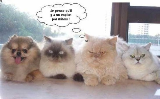 Les chats - nos petits compagnons - Page 9 X_17810