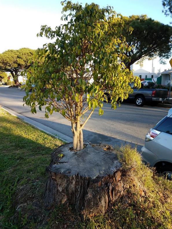 les arbres qui ne voulaient pas mourir X_18_g10