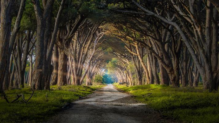 Des Chemins où la randonnée devient un rêve - X_19_i10