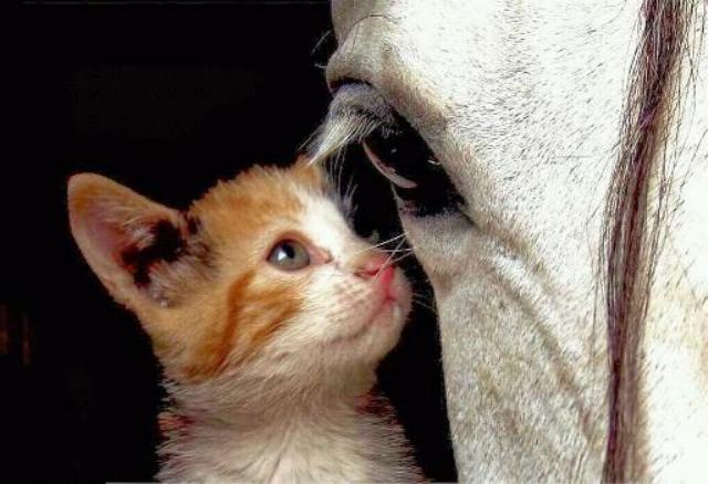Les chats - nos petits compagnons - Page 2 X_2118