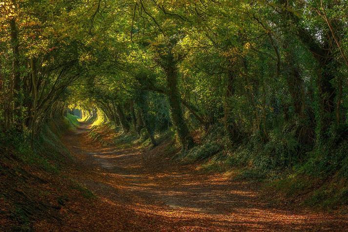 Des Chemins où la randonnée devient un rêve - X_22_a10