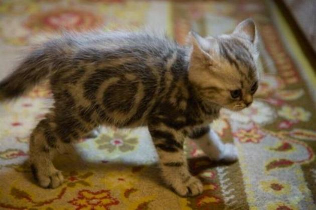 Les chats - nos petits compagnons - Page 2 X_2915