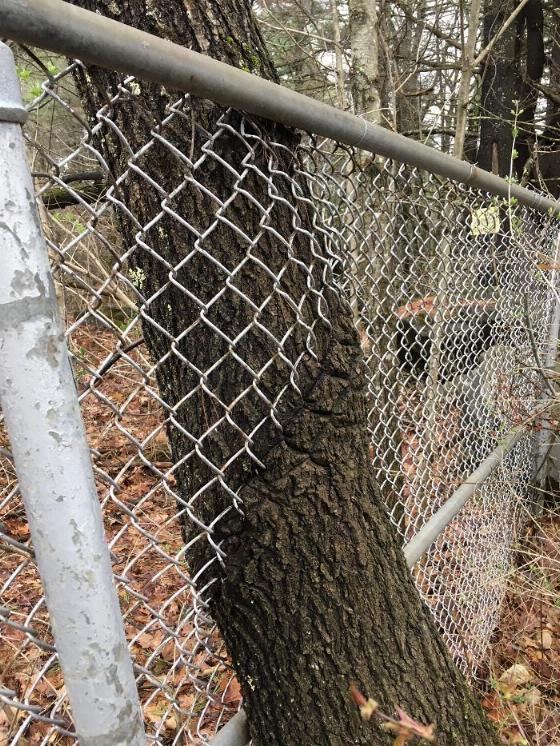 les arbres qui ne voulaient pas mourir - Page 2 X_29_g10