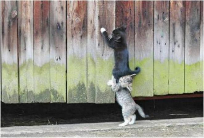 Les chats - nos petits compagnons - Page 2 X_3018