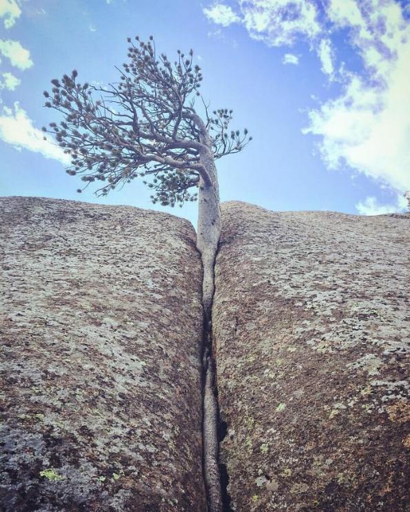 les arbres qui ne voulaient pas mourir - Page 2 X_30_u10