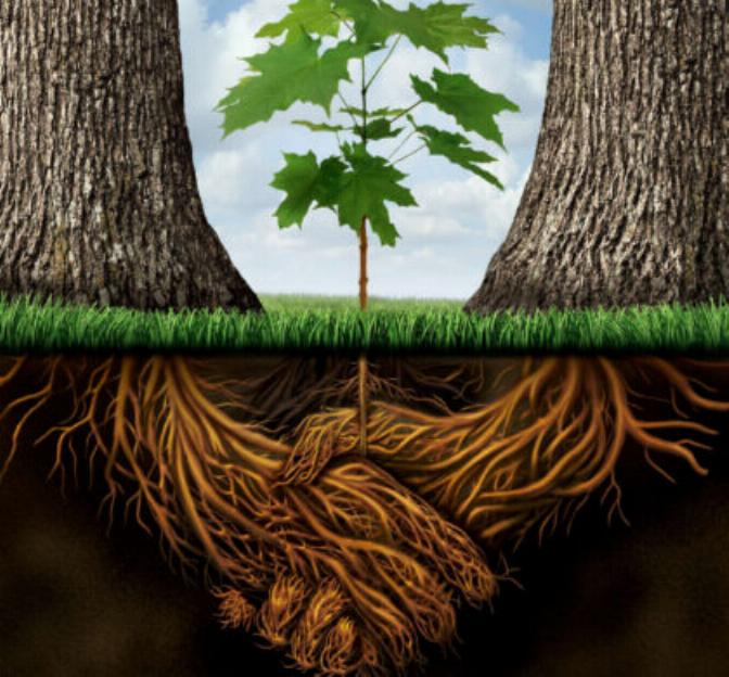 les arbres qui ne voulaient pas mourir - Page 2 X_3616