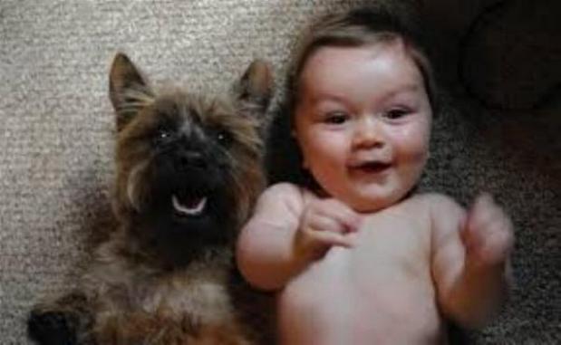 Chiens baby sitter - Page 2 X_3813