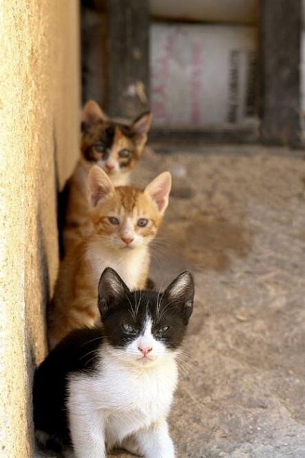 Les chats - nos petits compagnons - Page 3 X_4216