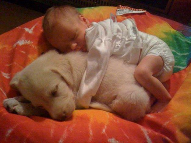 Chiens baby sitter - Page 2 X_4411