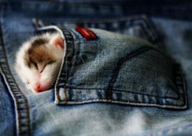 Les chats - nos petits compagnons - Page 4 X_4415