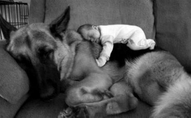 Chiens baby sitter - Page 2 X_4610