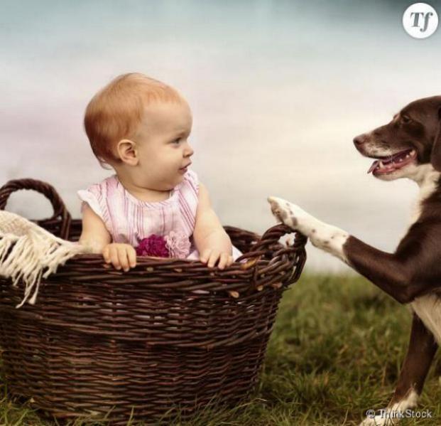 Chiens baby sitter - Page 2 X_4910
