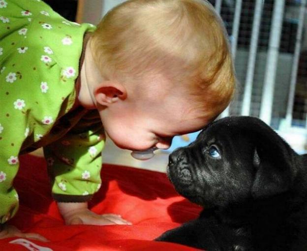 Chiens baby sitter - Page 2 X_5310