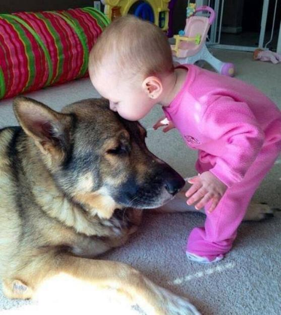 Chiens baby sitter - Page 3 X_6412