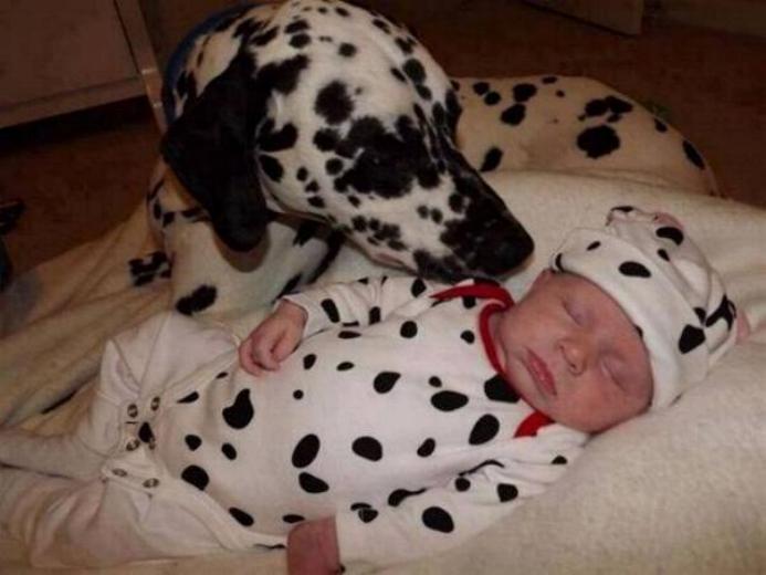Chiens baby sitter - Page 3 X_6510