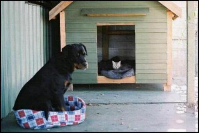Les chats - nos petits compagnons - Page 4 X_6713
