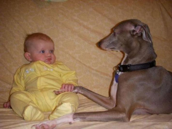 Chiens baby sitter - Page 3 X_6912