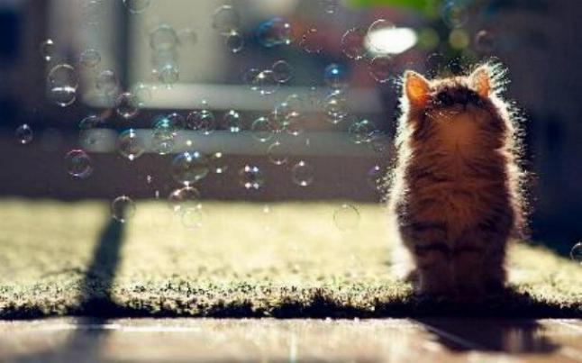 Les chats - nos petits compagnons - Page 4 X_7515