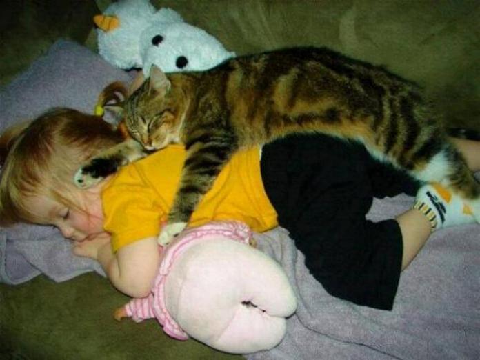 Les chats - nos petits compagnons - Page 4 X_7613