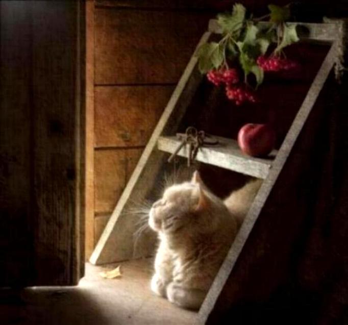 Les chats - nos petits compagnons - Page 4 X_7914