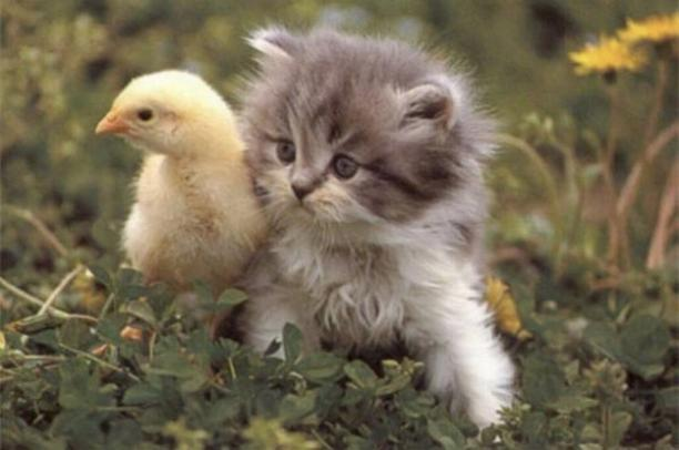 Les chats - nos petits compagnons - Page 4 X_8114