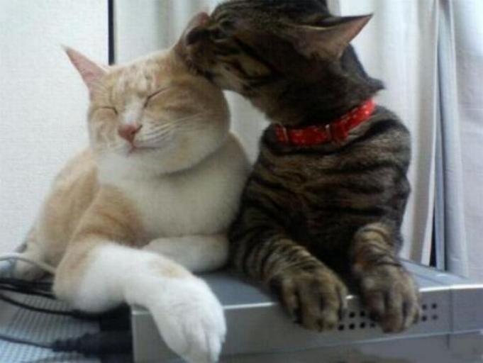 Les chats - nos petits compagnons - Page 5 X_8413