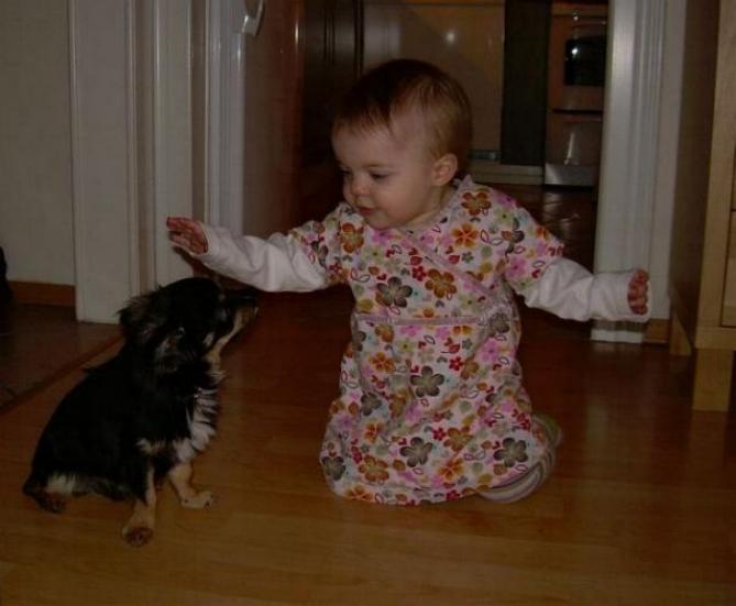 Chiens baby sitter - Page 4 X_8513