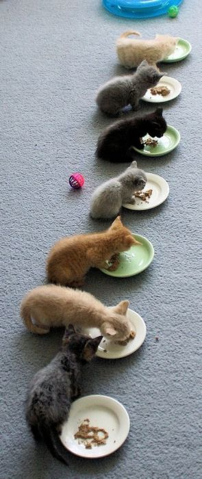 Les chats - nos petits compagnons - Page 3 Xx_3710