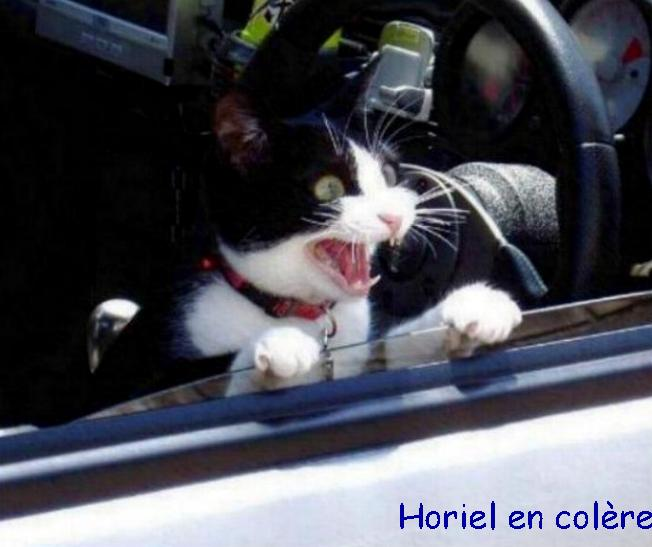 Les chats - nos petits compagnons - Page 3 Xx_6610