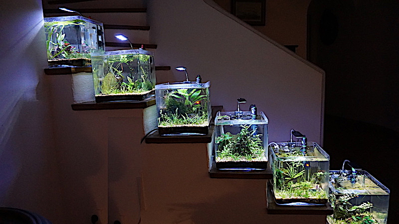 6 BACS ESCALIER dont 4 avec crevettes et 2 avec plantes - Page 4 Dsc00017